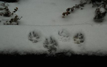93-apr-3-snowprints